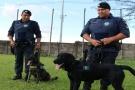 MURPHY JÁ PARTICIPA DAS OPERAÇÕES DO CANIL DA GUARDA MUNICIPAL
